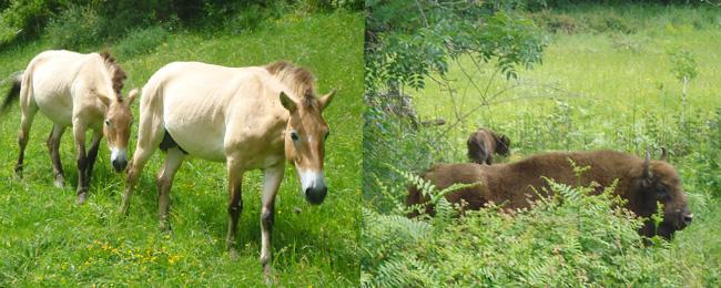 Asturias con niños: Finde Prehistórico en Teverga